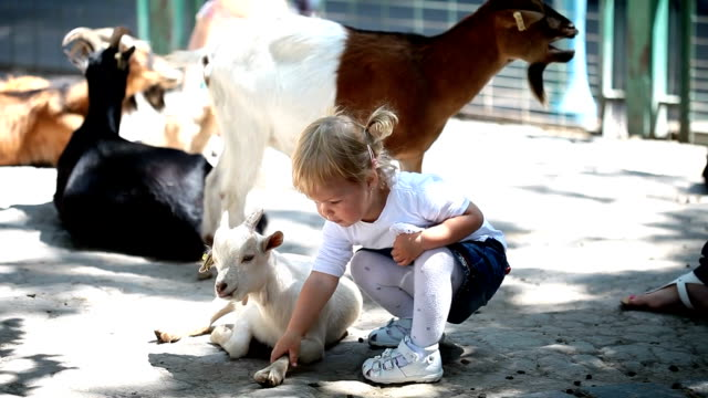 Sweet little girl in the zoo with goats video