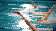 Swimming competition in the pool video