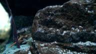 Swimming fish video