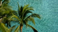 Swimming pool  and coconut tree video