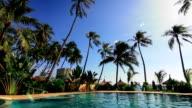 Swimming pool and palms loop video