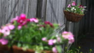 Swinging Hanging Baskets video