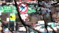 Symbols of Kyoto Accord (Anamorphic DV) and Japanese Traffic video