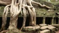Ta Prohm ruins courtyard panning Angkor Cambodia video
