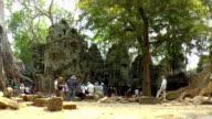 Ta Prohm Temple - Angkor, Cambodia video
