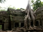 Ta Prohm with tree in Angkor complex Cambodia video