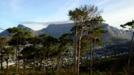 Table Mountain, one of the new seven wonders of the world, is revealed by rising through a tree line in an aerial video of this incredible natural landmark. video