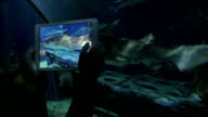 Taking pictures of shark by tablet at big aquarium. Siam Ocean World, Bangkok, Thailand video
