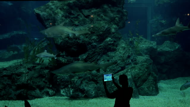 Taking pictures of sharks by tablet at big aquarium. Siam Ocean World, Bangkok, Thailand video