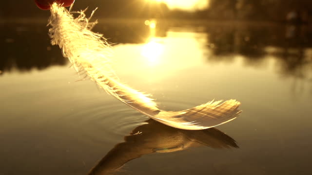 SLOW MOTION: taking the feather out of water video