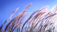 Tall Grass Background video