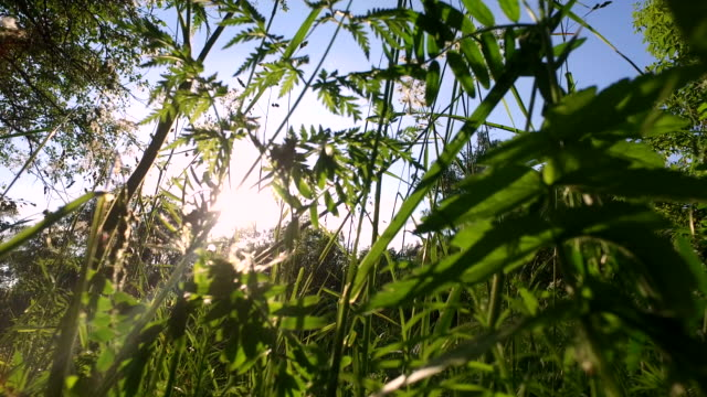 Tall grass grew up in the meadow. video