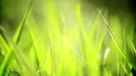 Tall grass video