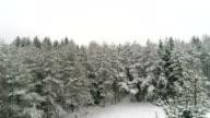 Tall spruce trees in Suur-Munamagi in Estonia video