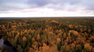Tall trees in the forest in Lahemaa Park video