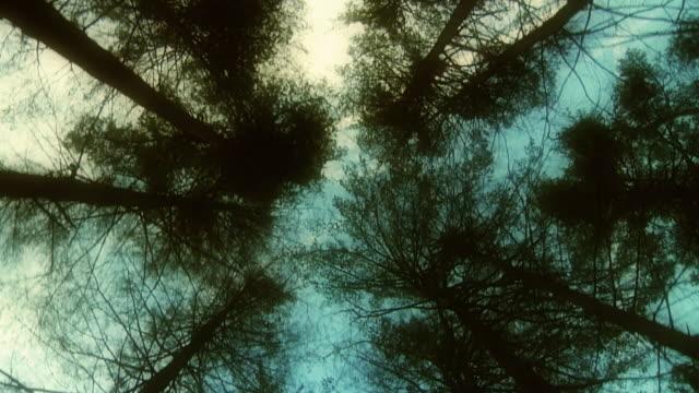 Tall Trees video