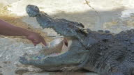 Tamers take money from inside the crocodile's mouth during a presentation video