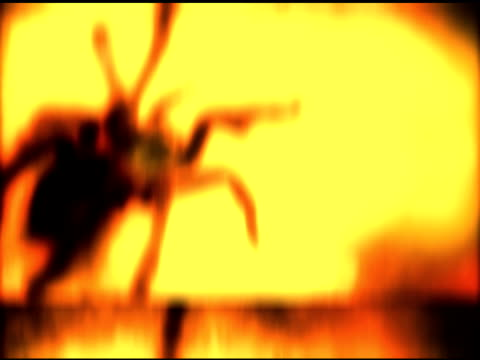 Tarantula 2 video
