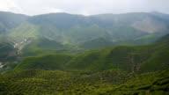 Tea farm landscape video