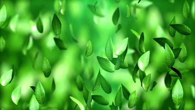 Tea leaves video