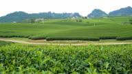 WS PR Tea Plantation in Moc Chau ,Vietnam video