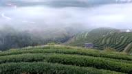 Tea plantation in morning view, Ang-Khang ,Chiangmai video