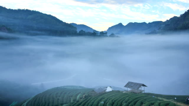 Tea plantation in morning view  ,Time lapse video