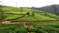 Tea Plantations in Nuwara Eliya video