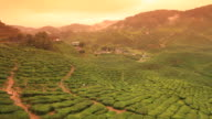 Tea valley video