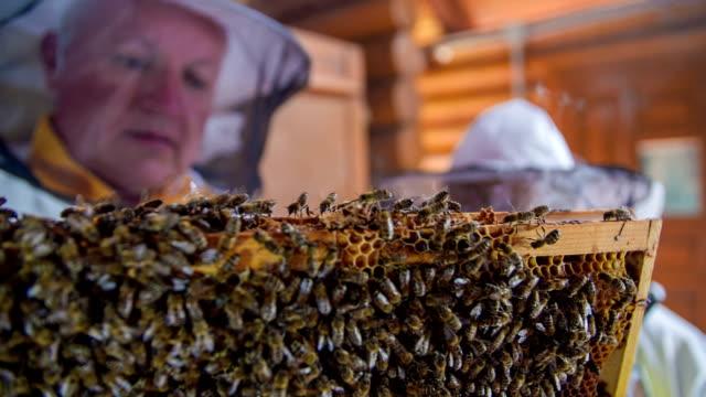 Teaching successors of supplying bees video