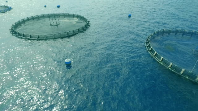 technology of the global aquaculture industry video