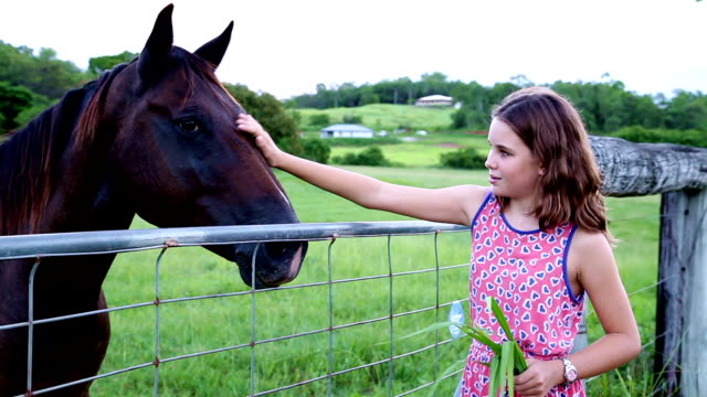 Teen girl patting horse over fence on farm video