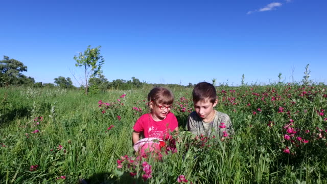 Teenager boy and girl child playing in a meadow. Brother and sister sitting in the grass. video