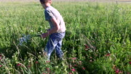 Teenager boy picking flowers in a meadow. video