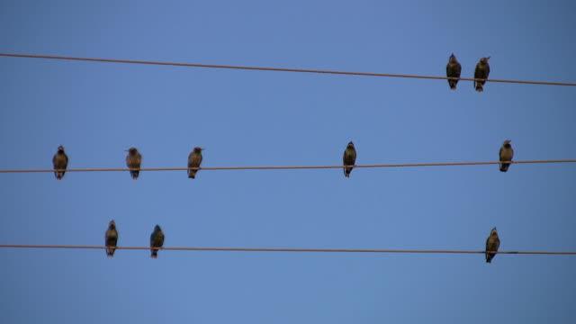 Ten birds. video