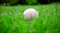 Tennins ball on grass. Closeup of dog toy on green lawn. White tennis ball video
