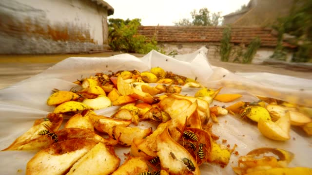 Tens Wasps and Flies have dinner and Fly over Pears on Background Country House video