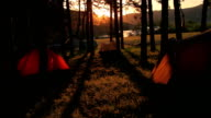 Tents in a forrest on sunset video