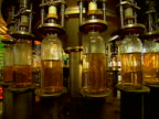 tequila factory bottles 01 video