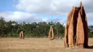Termite mounds Australia video