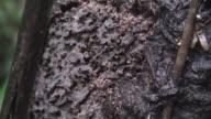 Termite nest video