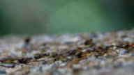 termite walking on the pavement. video
