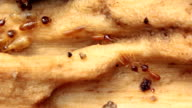 Termites in a rotting log video