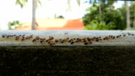 Termites moving video