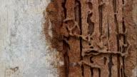 termites on wood video