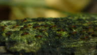 Termites Parade on branches. video