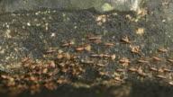 Termites Parade video