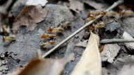 Termites ,termites in the forest video