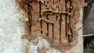 termites video