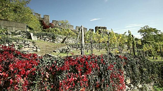 Terrace Fields with viticulture; Austria video